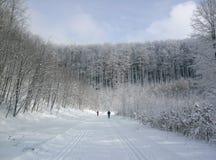Przecinającego kraju narciarstwo w ranku fotografia stock
