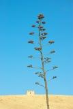 przeciw agawy niebieskiemu niebu Obraz Stock