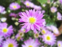 przeciw błękitny stokrotce kwitnie nieba kolor żółty Obraz Royalty Free
