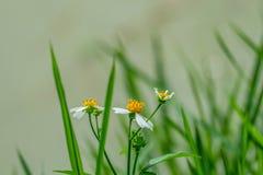 przeciw błękitny stokrotce kwitnie nieba kolor żółty Fotografia Stock