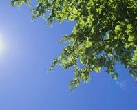 przeciw błękitny zieleni opuszczać niebo Zdjęcie Royalty Free