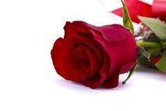 przeciw backround czerwieni róży pojedynczemu biel obraz stock