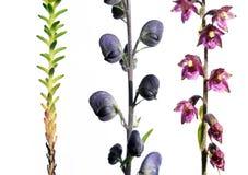 przeciw biały różnym tło roślinom Zdjęcia Royalty Free