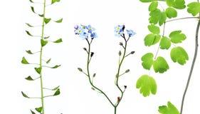 przeciw biały różnym tło roślinom Fotografia Royalty Free