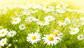 przeciw błękitny stokrotce kwitnie nieba kolor żółty Obrazy Royalty Free