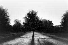 przeciw bw parkowemu słońca drzewu obrazy stock