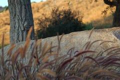 Przeciw drzewnemu zmierzchowi w Czerwcu zdjęcie stock