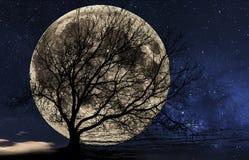 przeciw duży księżyc sylwetki drzewu Fotografia Royalty Free
