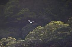 przeciw foilage zieleni seagull Fotografia Royalty Free