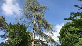 przeciw jesień błękitny strzału niebu brać drzewa zbiory