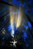 przeciw jesień błękitny strzału niebu brać drzewa Zdjęcia Stock