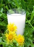 przeciw krowy szklanemu trawy zieleni mleku naturalnemu Obrazy Royalty Free