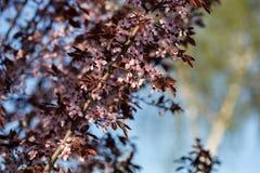 przeciw morelowego tła kwiatonośnemu niebu Zdjęcia Stock