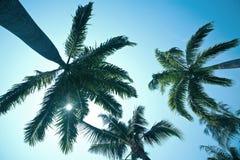 przeciw nieb błękitny kokosowym drzewom Obraz Stock