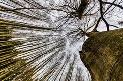 przeciw nieb drzewom Fotografia Stock