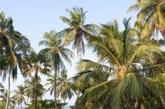 przeciw nieb pięknym jasnym palmowym drzewom Zdjęcia Stock