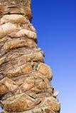 przeciw nieba błękitny palmowemu drzewu Obrazy Stock