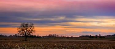 przeciw nieba chmurnemu pojedynczemu drzewu Zdjęcie Royalty Free
