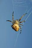 przeciw niebieskie niebo pająkowi Obrazy Stock