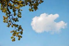 Przeciw niebieskiemu niebu dębowe gałąź Fotografia Royalty Free