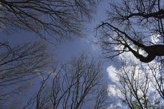 Przeciw niebu drzewa Zdjęcie Stock