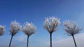 Przeciw niebu few drzewa w śniegu Obrazy Royalty Free