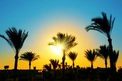 przeciw palmowym sylwetki słońca drzewom Fotografia Royalty Free