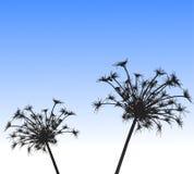 przeciw rośliny sylwetki niebu Zdjęcia Royalty Free