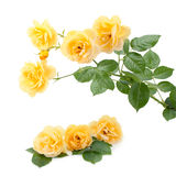 przeciw tła bukieta odosobnionemu róż biel kolor żółty Zdjęcie Royalty Free