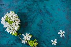 przeciw tła pojęcia kwiatu wiosna biały żółtym potomstwom Gałąź i kwiaty biała jabłoń na modnym szmaragdowozielonym tle Obraz Royalty Free
