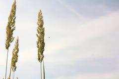 przeciw trawy niebu Zdjęcie Royalty Free