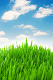 przeciw trawy zieleni niebu Obraz Stock