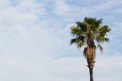 przeciwko błękitnemu nieba palmowemu drzewo zdjęcie stock