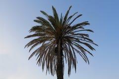 przeciwko b??kitnemu nieba palmowemu drzewo Swój liście jak słońce zaświecają w górę twój dnia! zdjęcie royalty free
