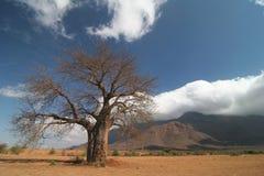 przeciwko baobabu cloudscape drzewo Zdjęcie Royalty Free