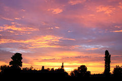 przeciwko sylwetka sunset drzewa zimą Zdjęcia Stock