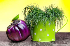 Przeciwutleniacza sukulentu warzywa Obrazy Royalty Free