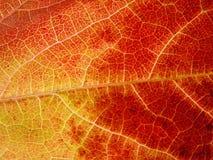 przeczytaj liści, żółty Fotografia Royalty Free