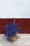 Przed ścianą błękitny kwiat Obrazy Stock
