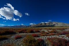 Przed śnieżną górą czerwone trawy Zdjęcie Royalty Free