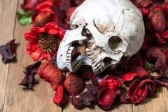 Przed ludzką czaszką umieszczającą na czerwieni suszącej kwitnie na drewnianym tle pojęcie śmierć i Halloween obrazy stock