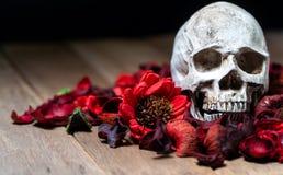 Przed ludzką czaszką umieszczającą na czerwieni suszącej kwitnie na drewnianym tle pojęcie śmierć i Halloween obrazy royalty free