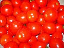przednia pomidorowego w dojrzały widok obraz royalty free