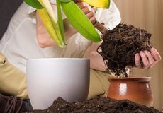 Przeflancowywać rośliny Obraz Royalty Free