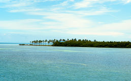 Przegapiający zatoki z drzewkami palmowymi w Floryda, Fotografia Royalty Free