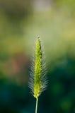 Przegięta trawa Zdjęcia Stock