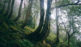 Przegięci drzewa na zboczu góry Fotografia Stock