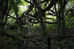 Przegięty drzewo Zdjęcie Royalty Free