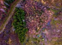 Przegląd las zdjęcie royalty free