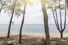Przegląda morze z drzewami od przód plaży z światłem słonecznym Fotografia Stock